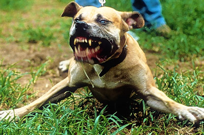 What Is The Meanest Dog Breed
